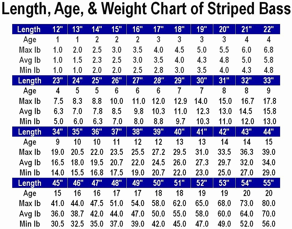Age and Weight Chart Unique Length Age & Weight Chart Striped Bass Main forum