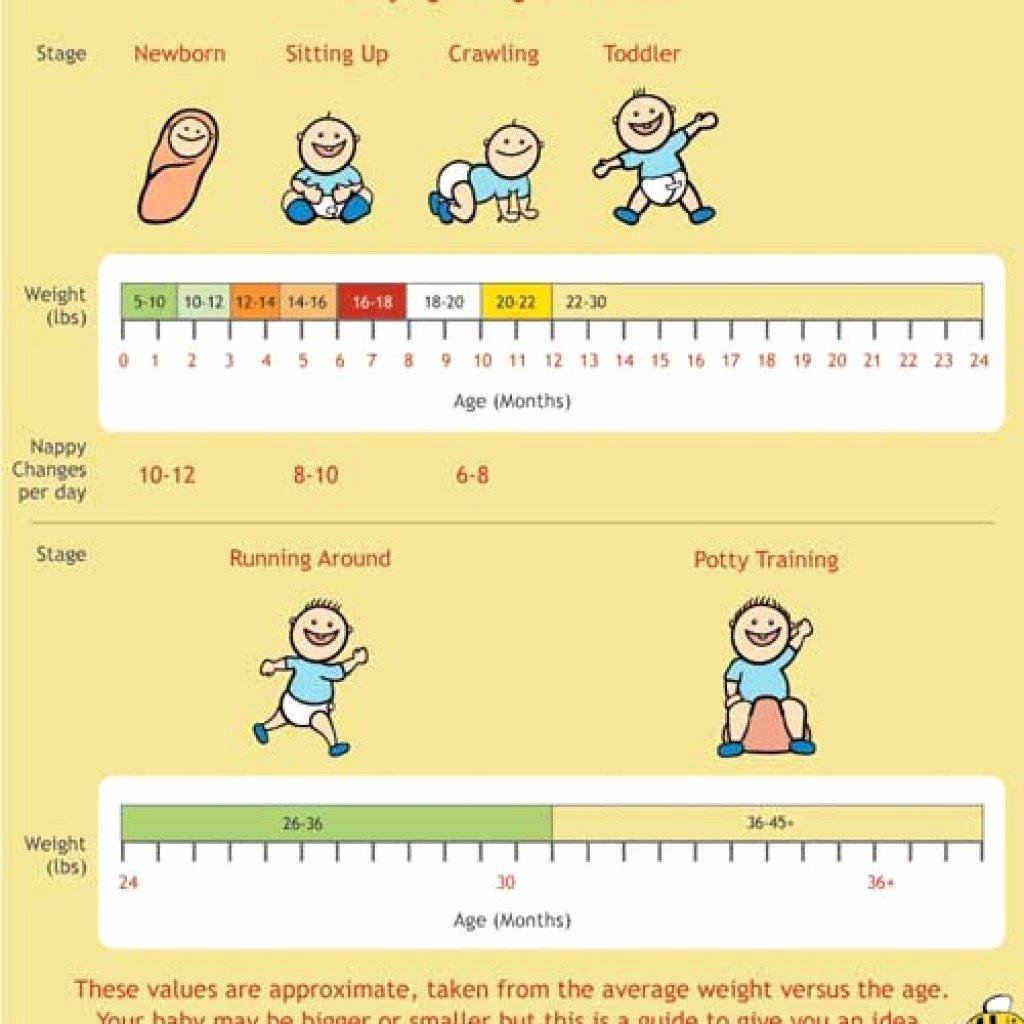 Average Baby Weight Chart Unique 24 Baby Weight Charts Template Lab
