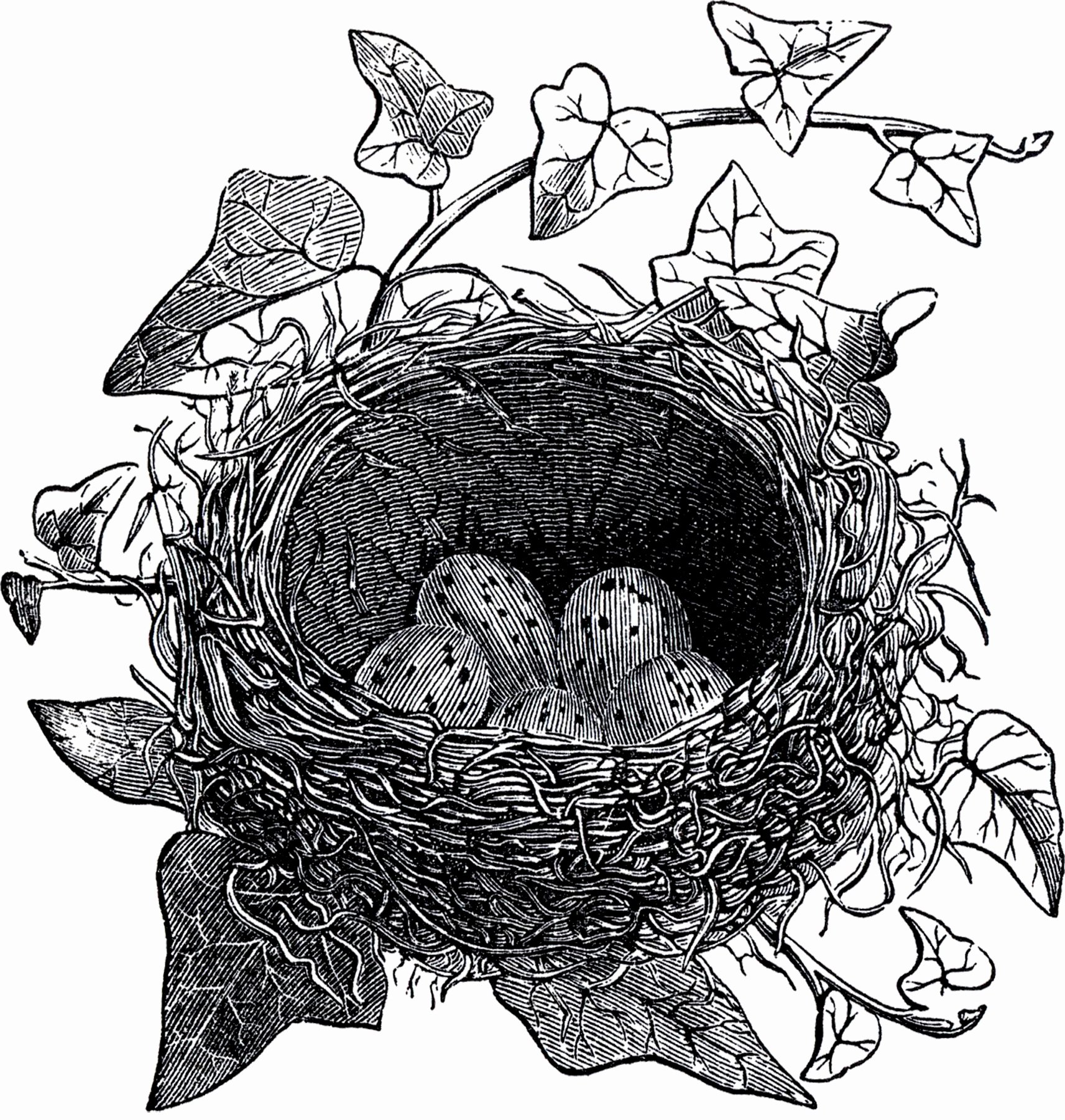 Black and White Illustration Awesome Antique Bird Nest Illustration the Graphics Fairy