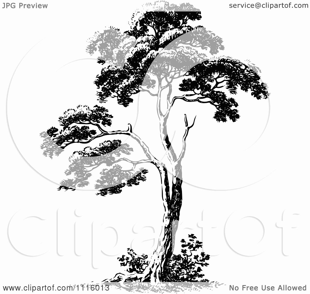 Black and White Illustration Best Of Clipart Retro Vintage Black and White Tree 2 Royalty