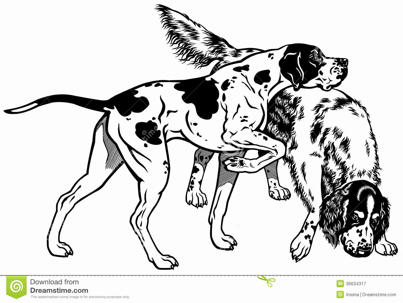 Black and White Illustration Best Of Pointer and Setter Black White Royalty Free Stock