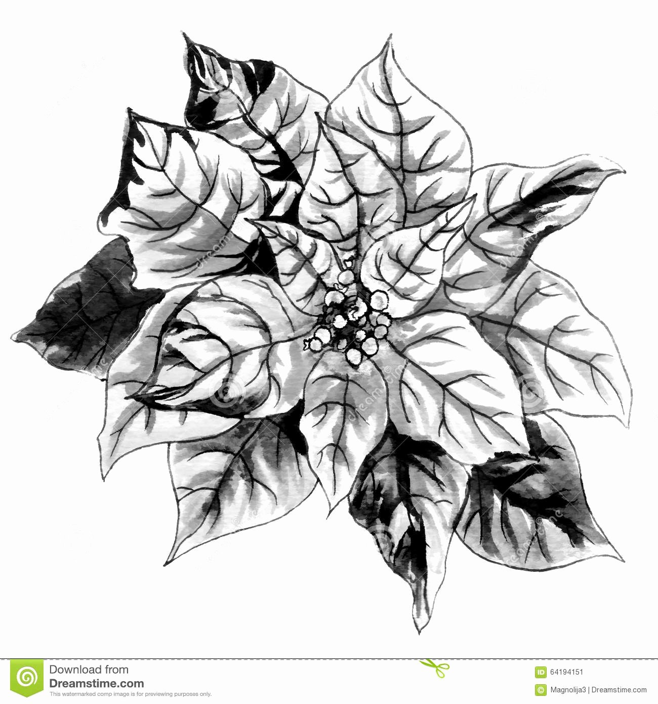 Black and White Illustration Elegant Christmas Star Black and White Monochrome Flower Stock
