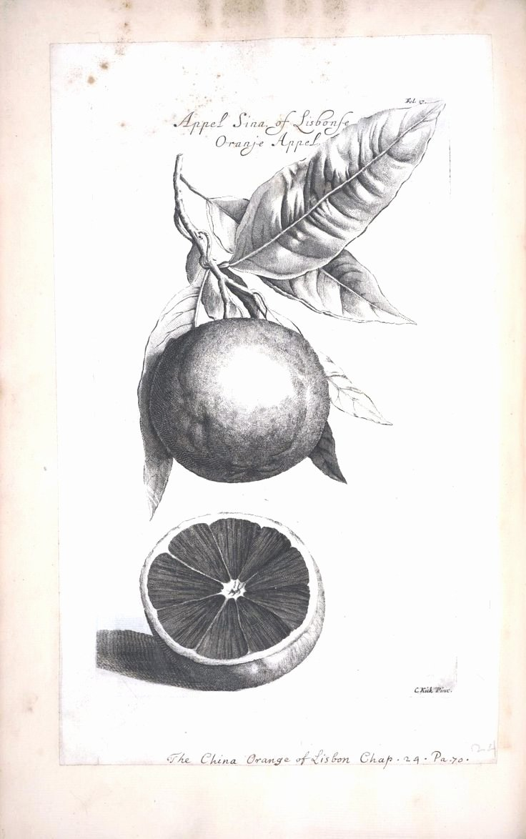 Black and White Illustration Inspirational Botanical Black and White Fruit Limeon orange 5