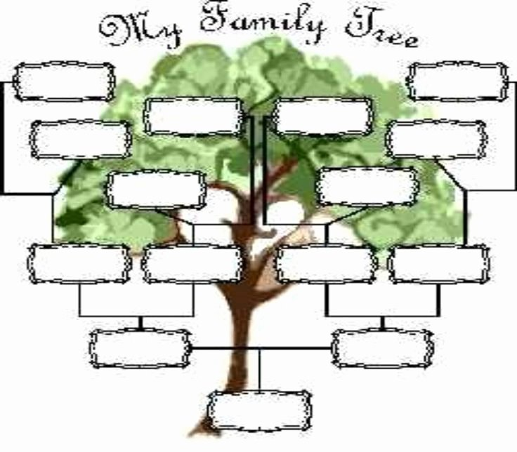 Blank Family Tree Template Luxury Blank Family Tree Page View Full Size
