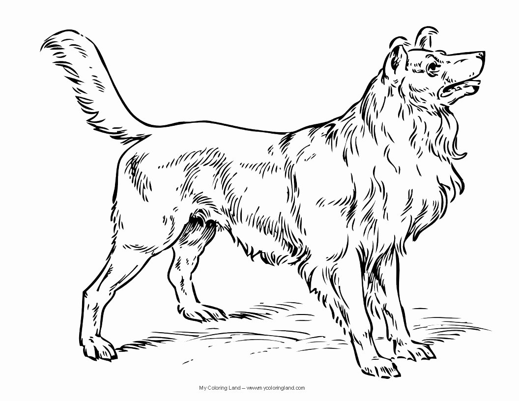 Coloring Pages Of Puppies Awesome Dog My Coloring Land