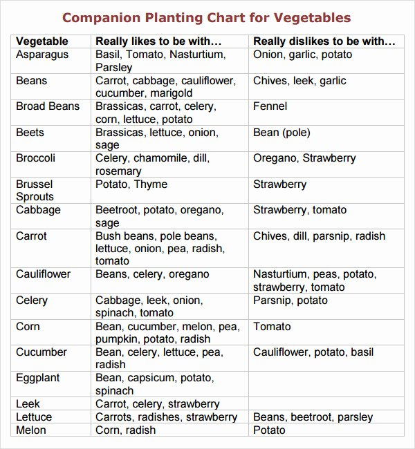 Companion Planting Chart for Vegetables Awesome Sample Panion Planting Chart 7 Documents