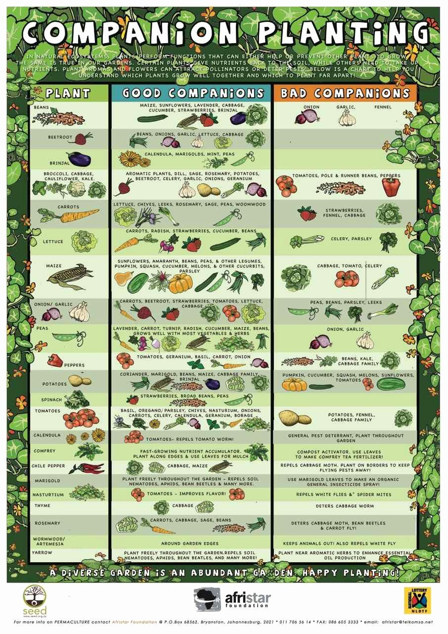 Companion Planting Chart for Vegetables Best Of Panion Planting Chart Growin Crazy Acres
