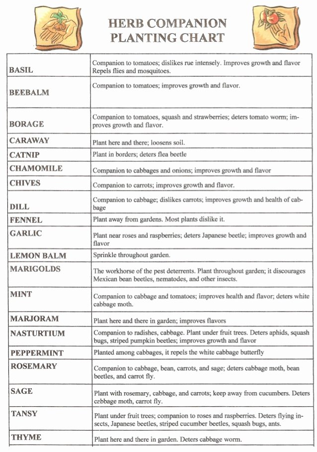 Companion Planting Chart for Vegetables Best Of Ve Able Panion Planting Chart Pattysplants