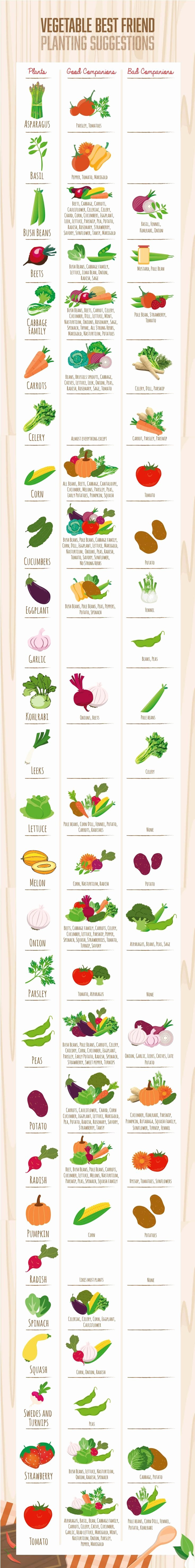 Companion Planting Chart for Vegetables Elegant Panion Planting Chart Guide for Ve Ables