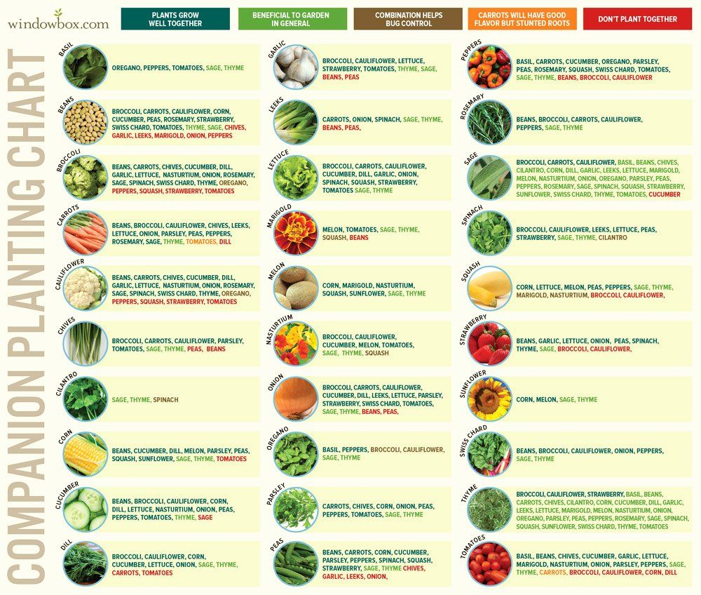 Companion Planting Chart for Vegetables Inspirational Panion Planting Chart for Ve Ables