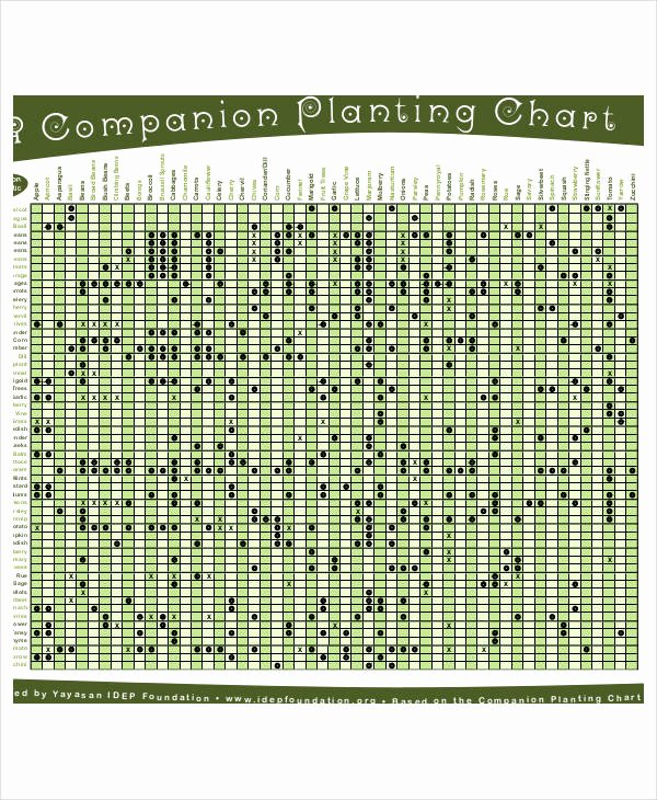 Companion Planting Chart for Vegetables Lovely Panion Planting Chart 9 Free Excel Pdf Documents