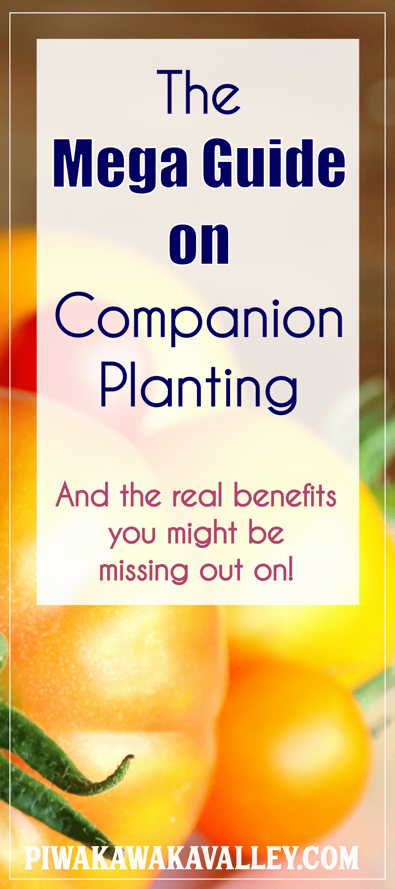 Companion Planting Chart for Vegetables Lovely Panion Planting Chart for Ve Ables and Herbs