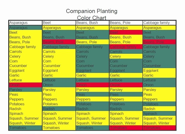 Companion Planting Chart for Vegetables Lovely Panion Planting Chart Gardening & Outdoors