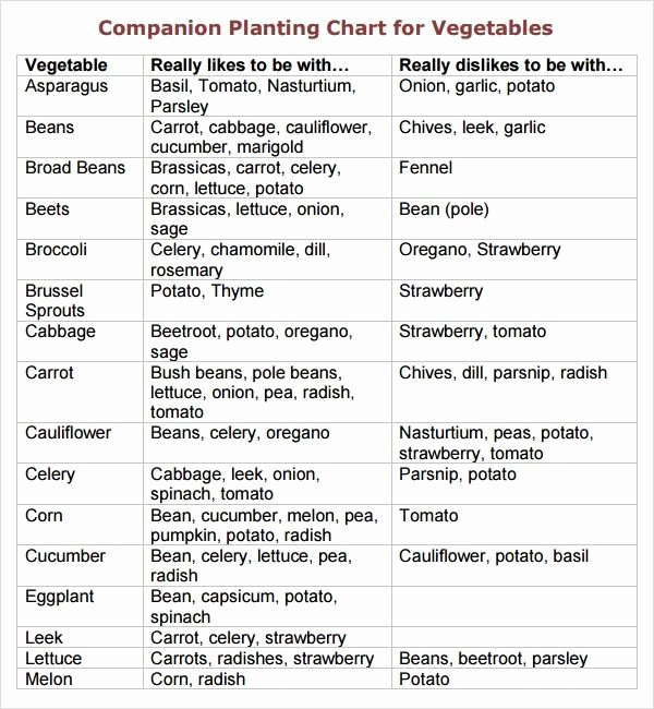 Companion Planting Chart for Vegetables Lovely Printable Ve Able Panion Planting Chart