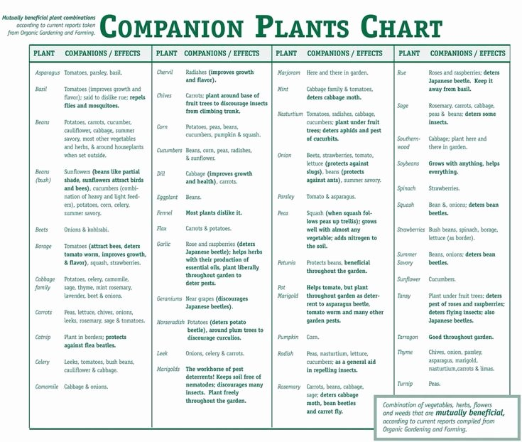 Companion Planting Chart for Vegetables Luxury Panion Plants Chart What to Plant to Her