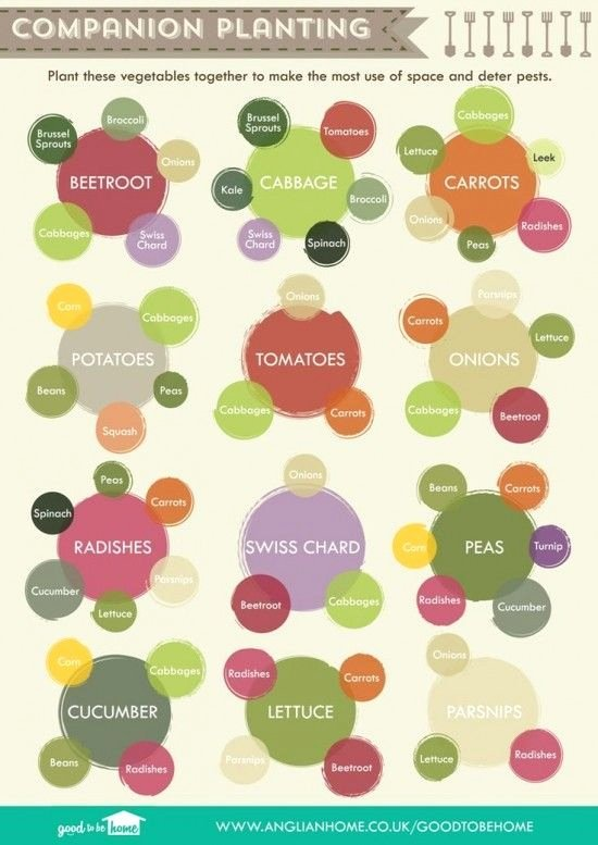 Companion Planting Chart for Vegetables New Panion Planting Chart Lots Great Info Video Tutorial