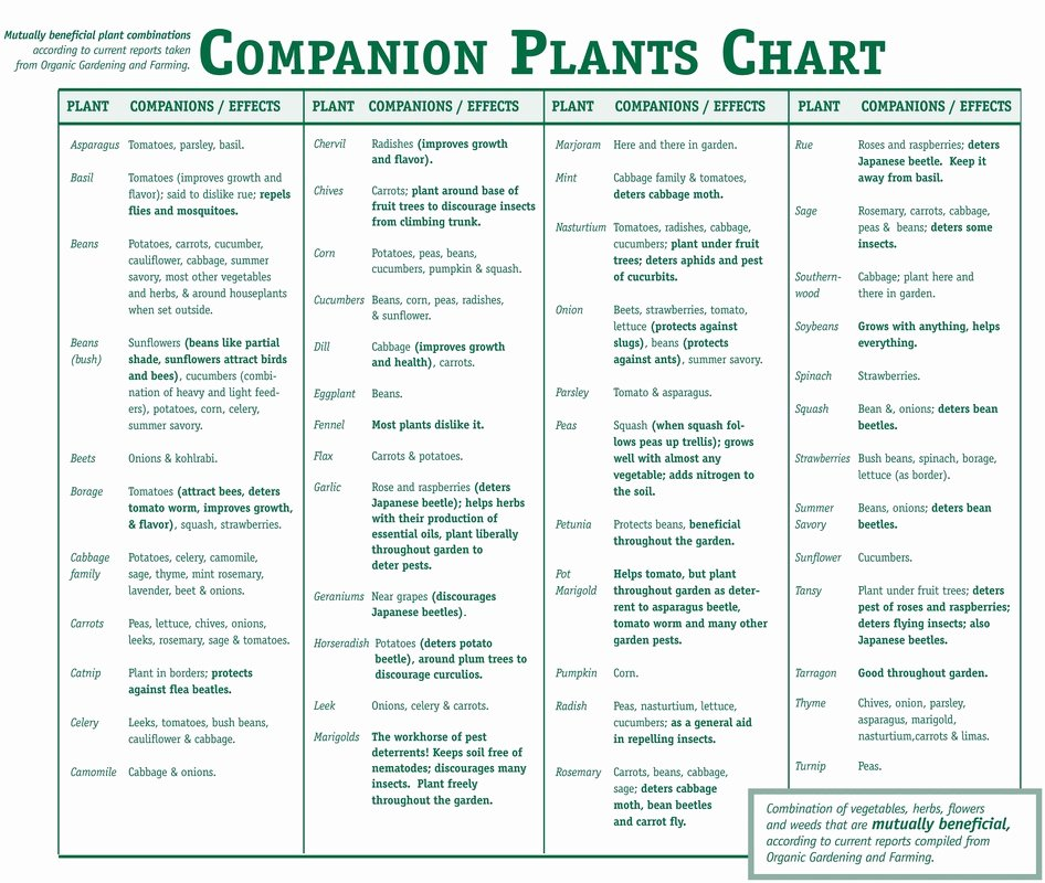 Companion Planting Chart for Vegetables Unique Panion Planting Smart Health Talk