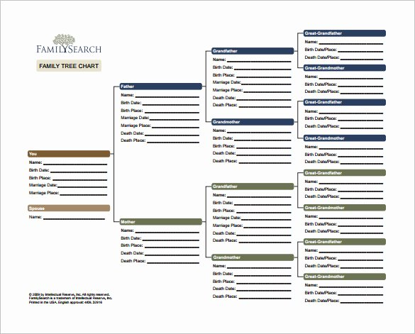 Free Family Tree Template Excel Best Of 8 Family Tree Chart Template Free Word Excel Pdf