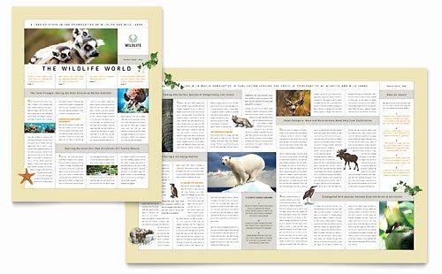 Free Publisher Newsletter Templates Lovely Free Sample Newsletter Templates Word & Publisher