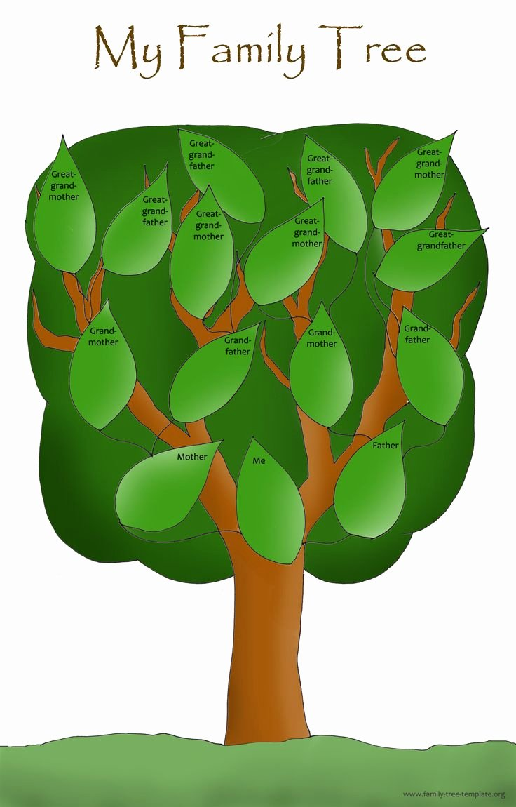 Simple Family Tree Template Fresh Family Blank Tree Template