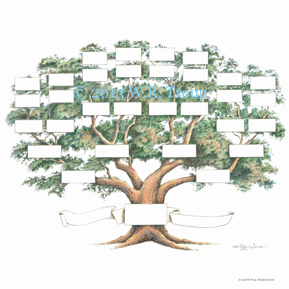 Template for Family Tree Luxury Family Tree Scrapbook Chart 12x12 Inch 5 6 Generations