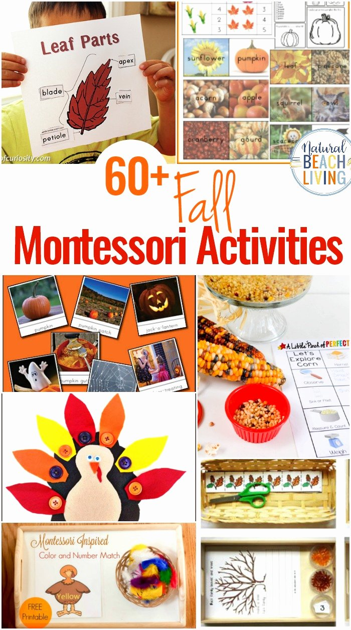 Toddler Lesson Plan Ideas Unique 40 Best Fall Preschool themes and Activities Natural