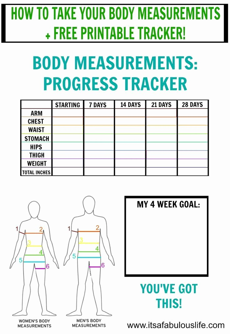 Weight Loss Measurement Chart Elegant How to Take Body Measurements Free Printable