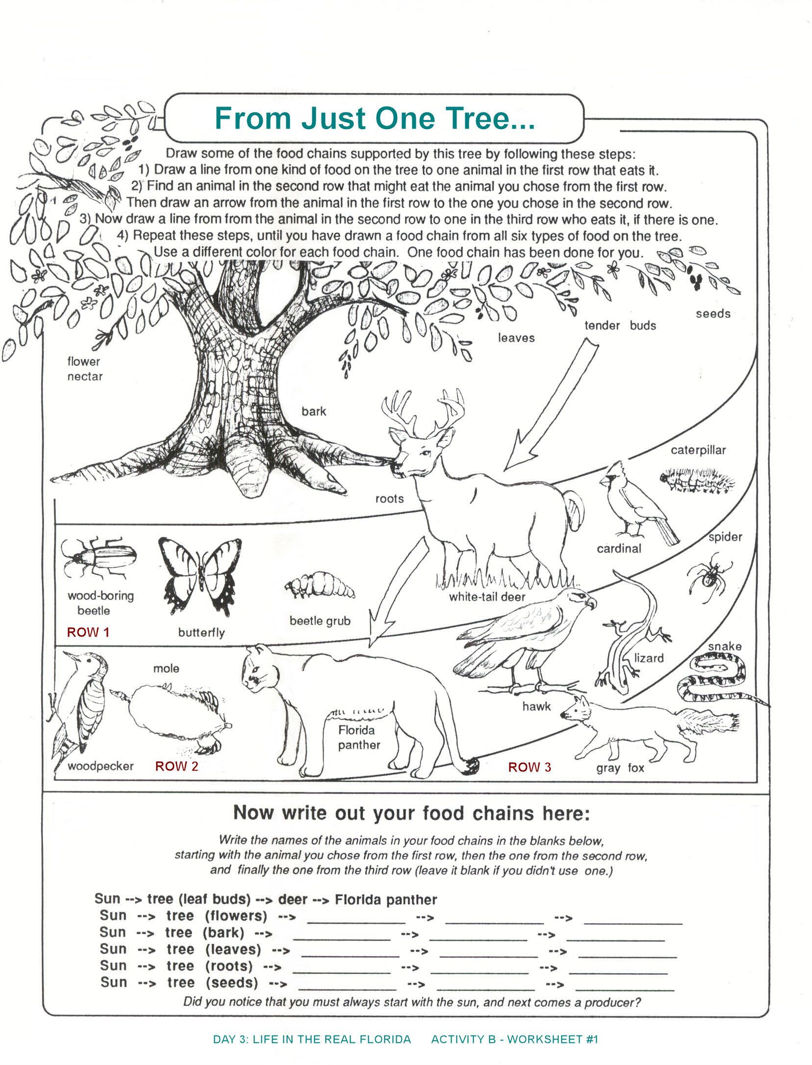 3rd Grade Ecosystem Worksheets Florida Food Chain Worksheet From Just One Tree