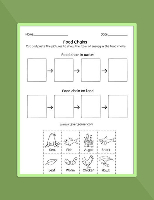 3rd Grade Ecosystem Worksheets Food Chain Food Web Ecosystems Printables and Worksheets