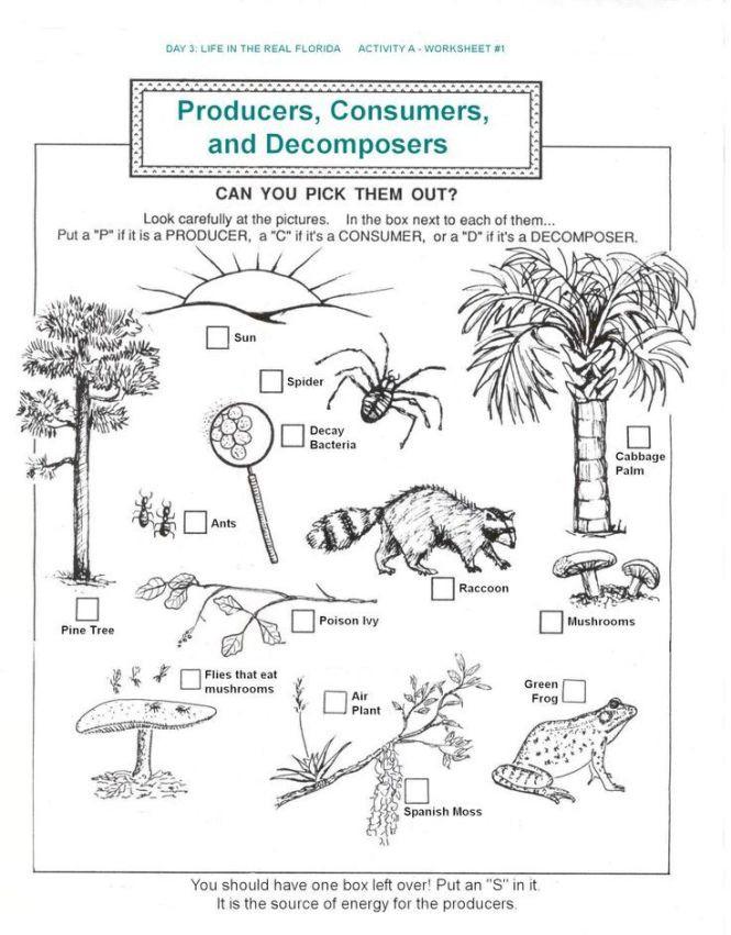 3rd Grade Ecosystem Worksheets Plant Reproduction Worksheet Best Plants 2017