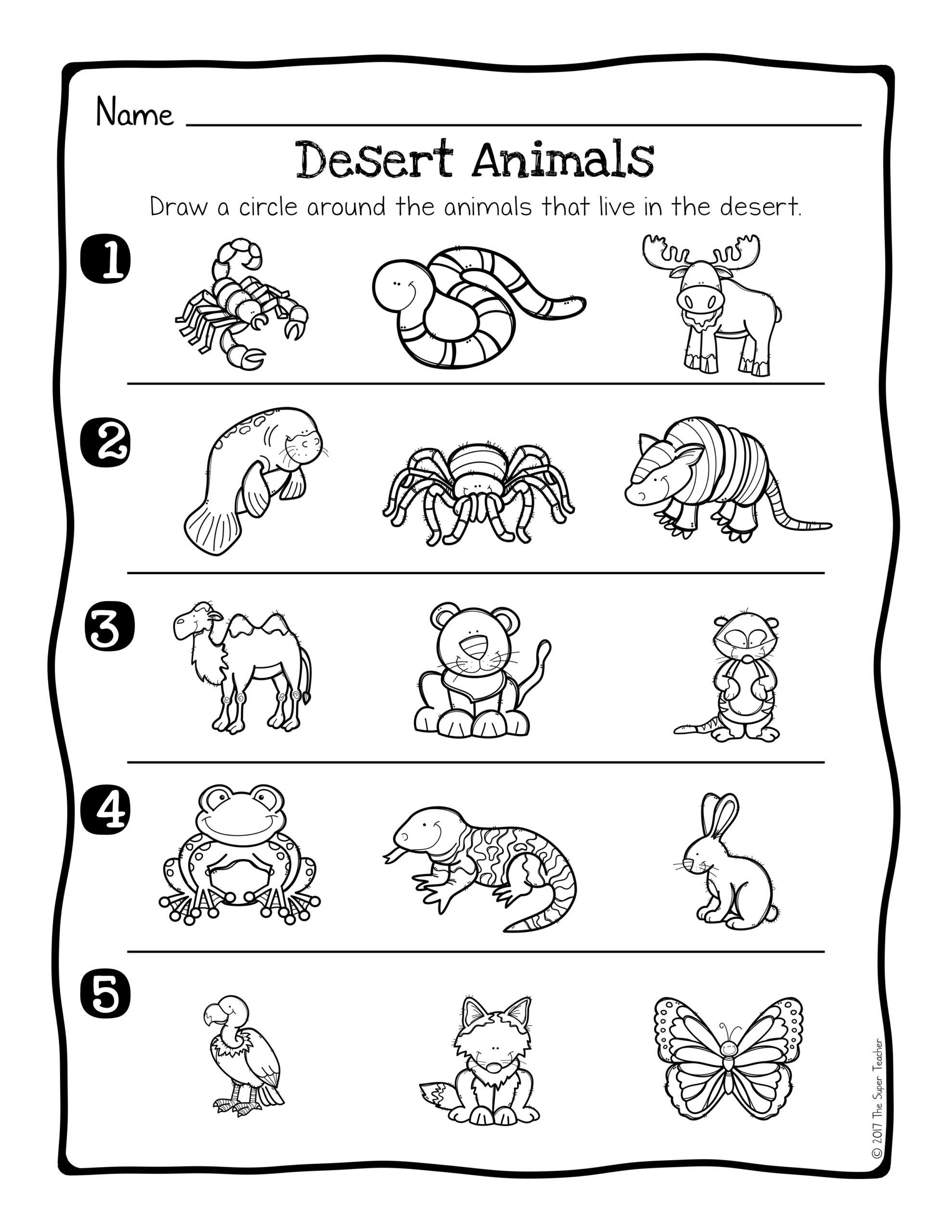 3rd Grade Habitat Worksheets Animal Adaptations Worksheets 3rd Grade