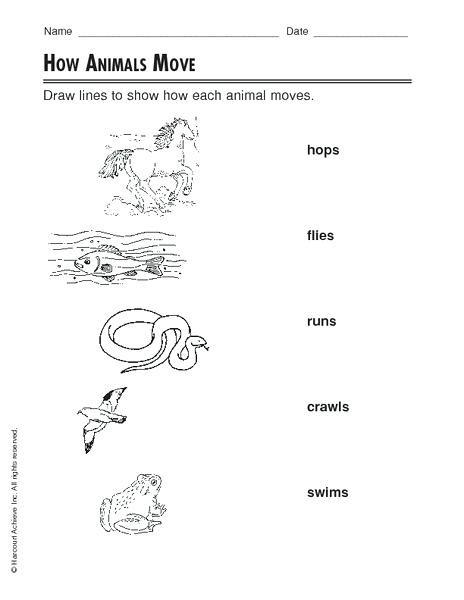 3rd Grade Habitat Worksheets Movement Of Animals Worksheets – Leter