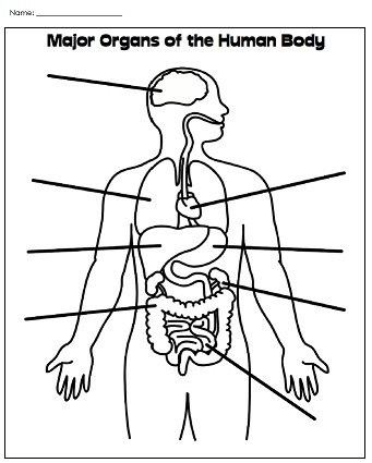 3rd Grade Human Body Worksheets Printable Human Body Worksheet