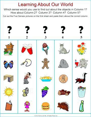 5 Senses Kindergarten Worksheets Five Senses Activities for Kindergarten 5 Senses for