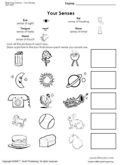 5 Senses Printable Worksheets Five Senses Activities for Kindergarten Snapshot Image