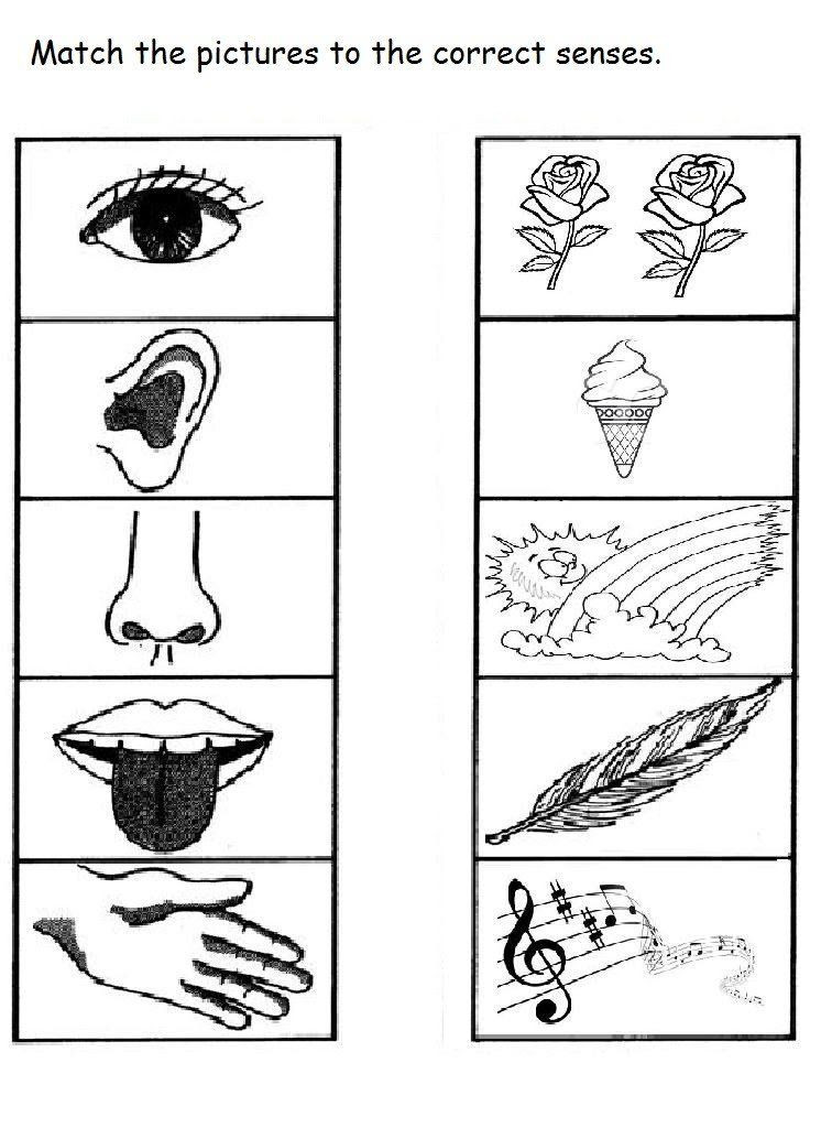 5 Senses Worksheet for Kindergarten 5 Senses Worksheet for Kids 10