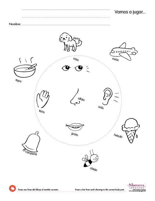 5 Senses Worksheets Kindergarten Five Sense Worksheet New 90 the Five Senses Worksheet Pdf