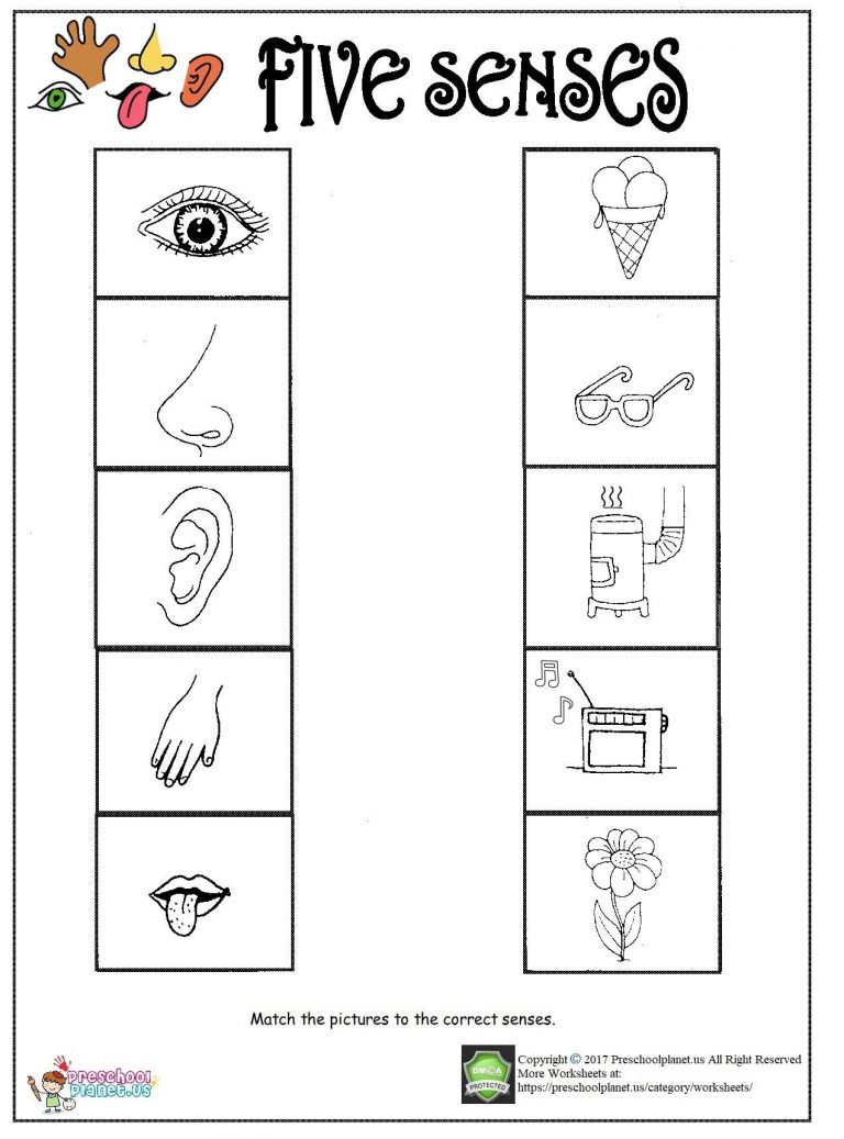 5 Senses Worksheets Kindergarten Printable Five Senses Worksheet – Preschoolplanet