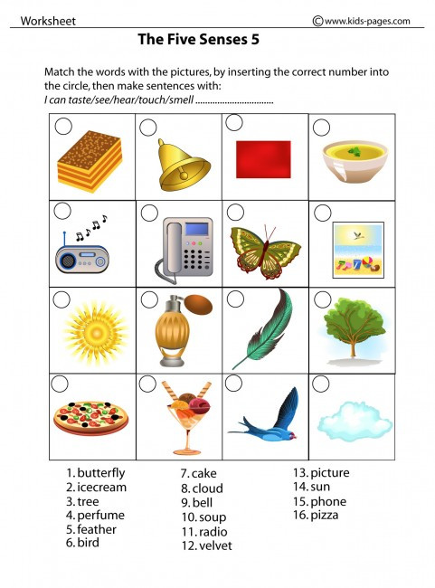 5 Senses Worksheets Kindergarten the Five Senses 5 Worksheet