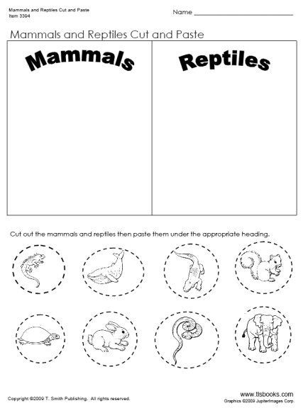Amphibian Worksheets for Second Grade 28 [ Reptile Worksheets ]