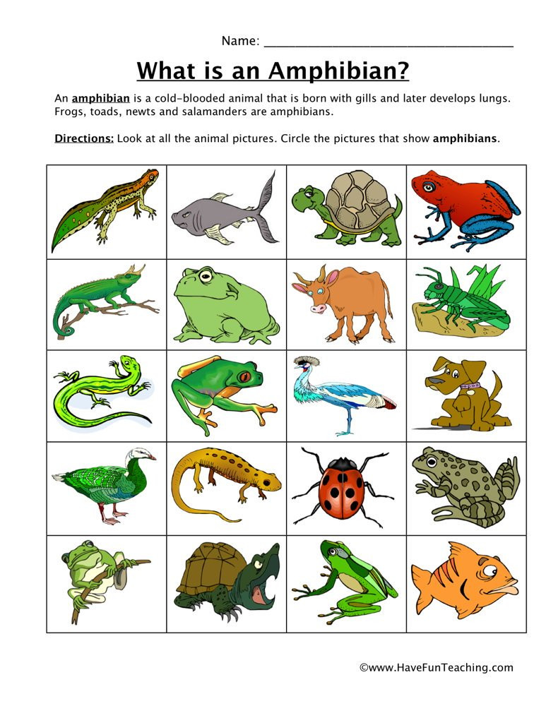 Amphibian Worksheets for Second Grade Amphibian Classification Worksheet