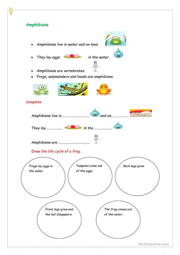 Amphibian Worksheets for Second Grade Amphibians English Esl Worksheets for Distance Learning