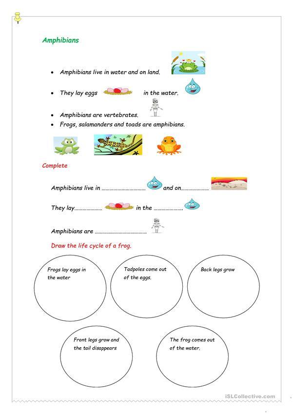Amphibian Worksheets for Second Grade Amphibians English Esl Worksheets for Distance Learning