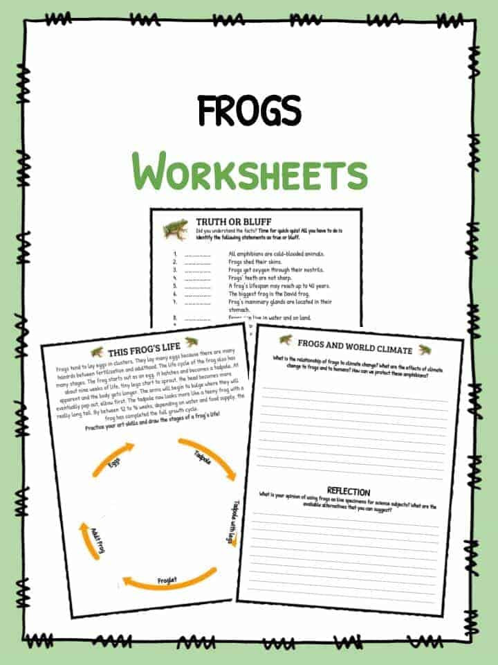 Amphibian Worksheets for Second Grade Frog Facts Worksheets & Information for Kids