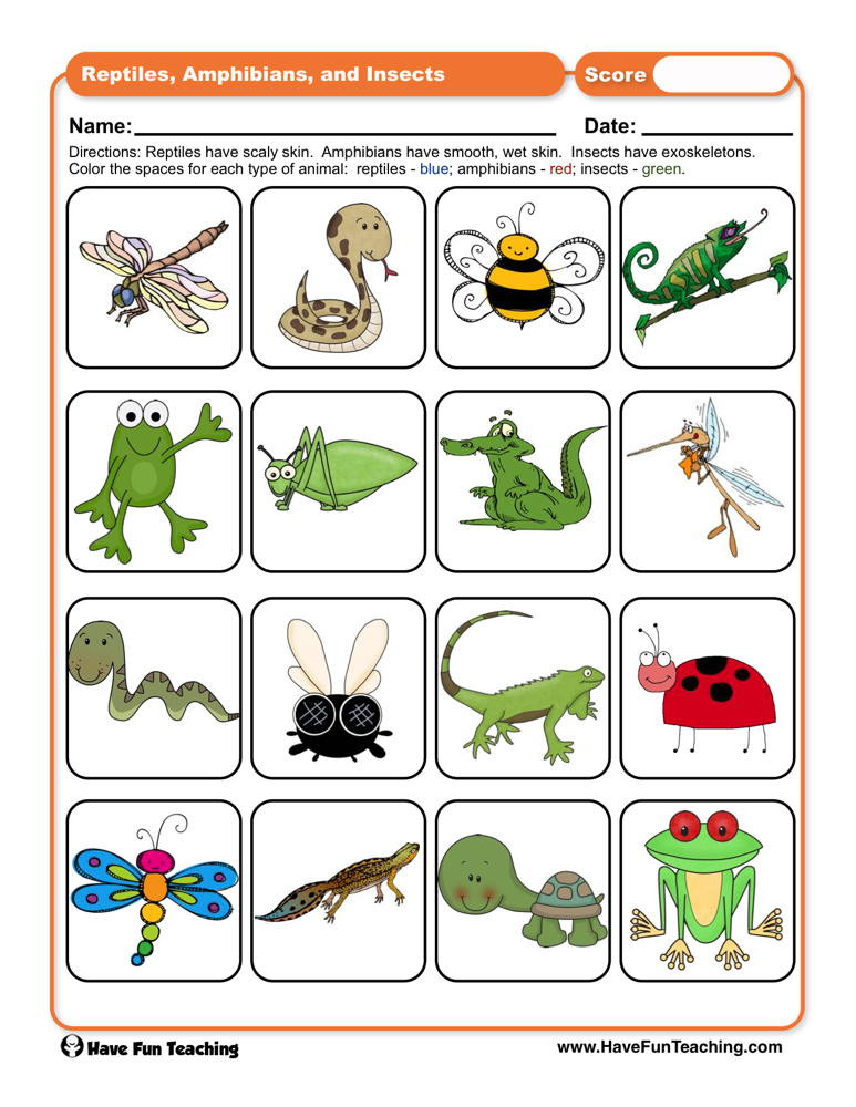 Amphibian Worksheets for Second Grade Reptiles Amphibians and Insects Worksheet