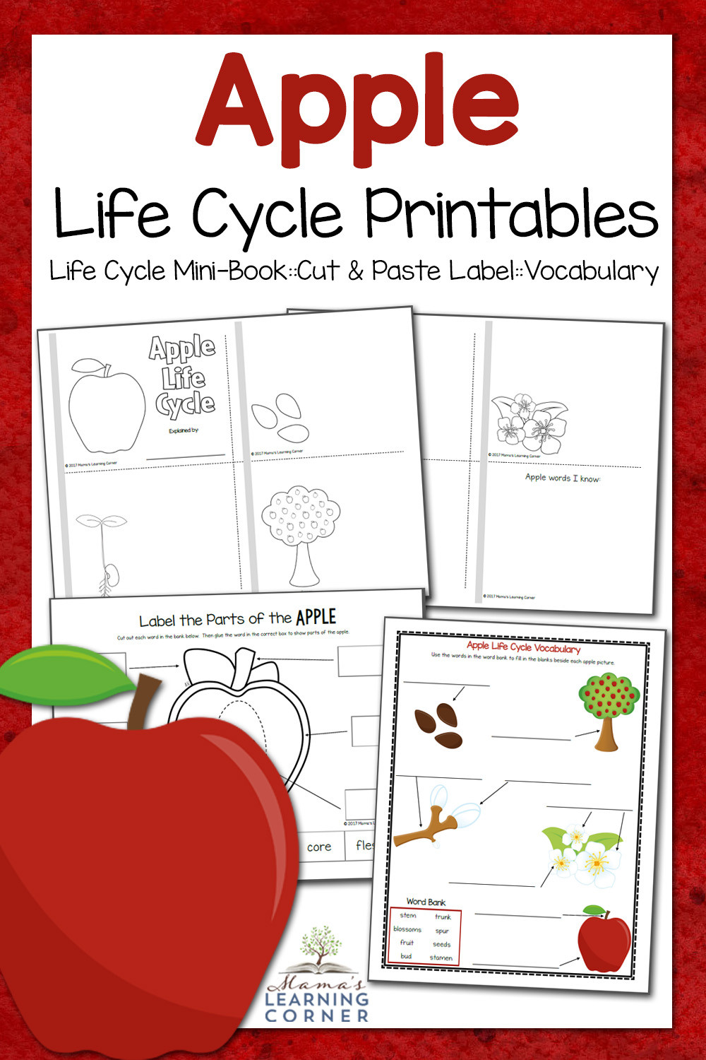 Apple Worksheets Kindergarten Apple Life Cycle Worksheets Mamas Learning Corner
