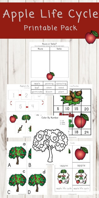 Apple Worksheets Kindergarten Free Apple Life Cycle Printable Pack