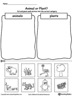 Categorizing Worksheets for Kindergarten Preschool sorting and Categorizing Printable Worksheets