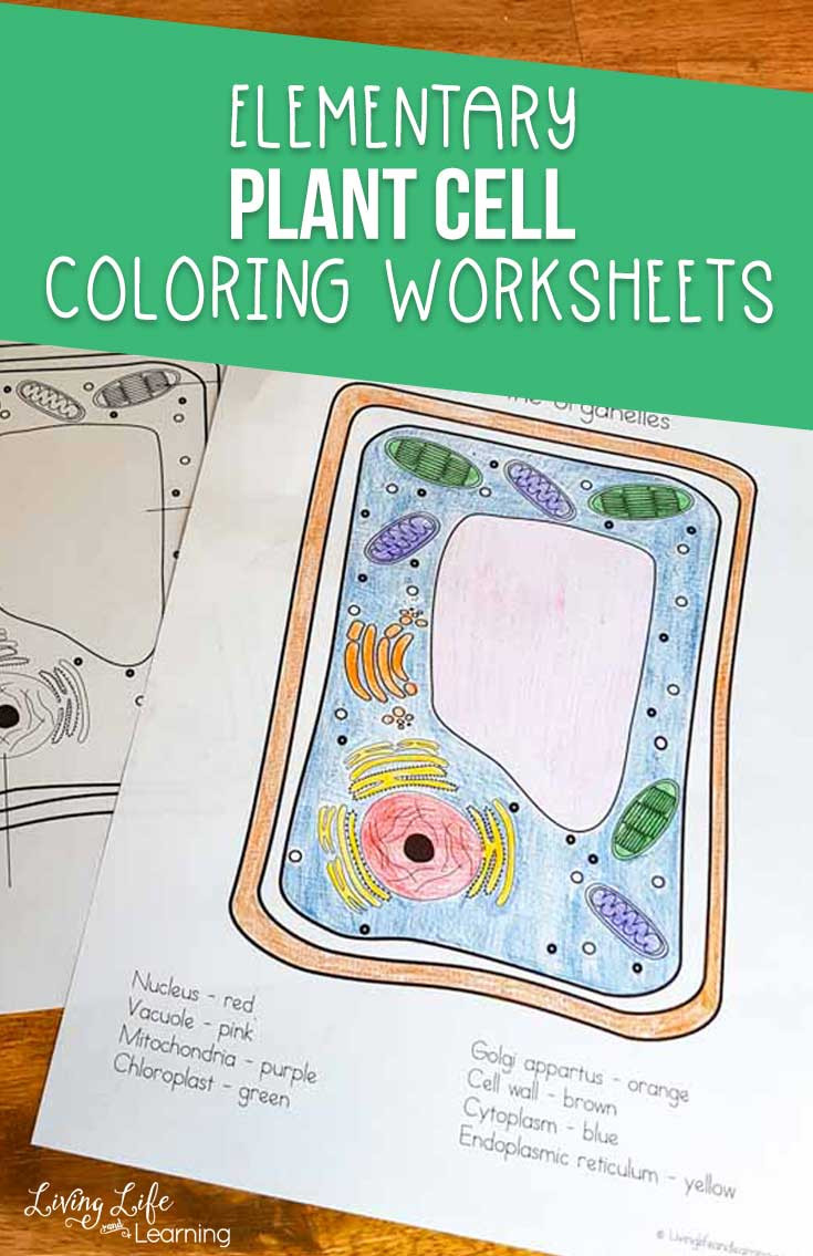 Cell Coloring Worksheets Plant Cell Coloring Worksheet