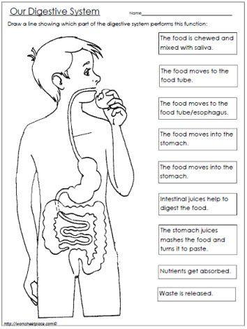 Digestive System Coloring Worksheet 188 รูปภาพที่ดีที่สุดในบอร์ด Education ในปี 2020